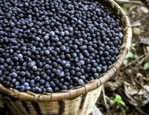 basket of harvested acai berries