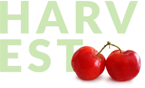 two acerola berries and harvest text