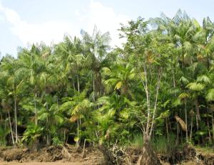 edge of rainforest