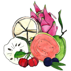illustration of graviola, cupuacu, goiaba, pitaya, acerola, and acai fruits