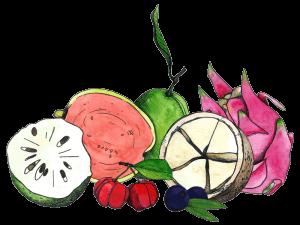 drawings of graviola, acerola, goiaba, pitaya, cupuacu, and acai