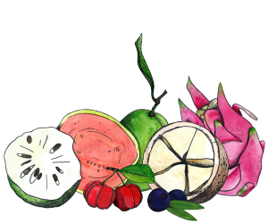 goiaba, graviola, acerola, acai, cupuacu and pitaya illustrations