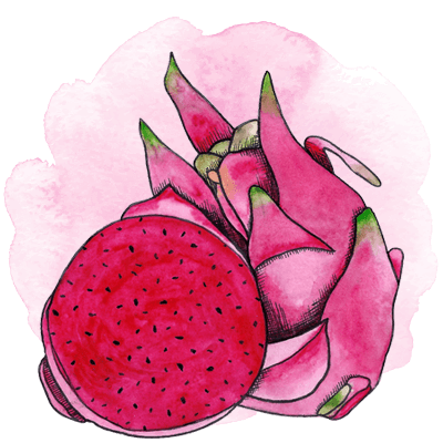pitaya illustration