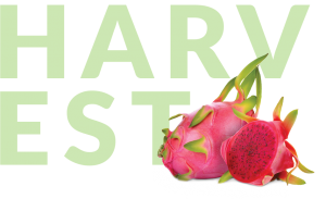 Pitaya with Harvest in backgroun