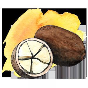illustration of cupuacu fruit